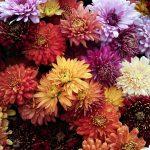 Jakie kwiaty do salonu?