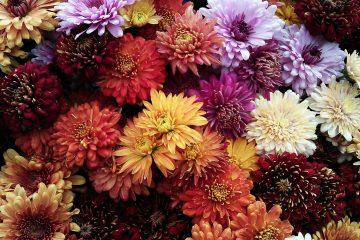 jakie kwiaty do salonu
